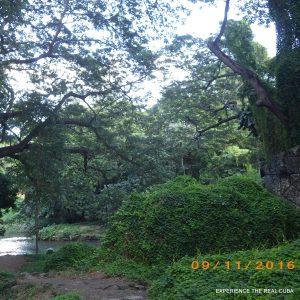 Havana Forest Cuba